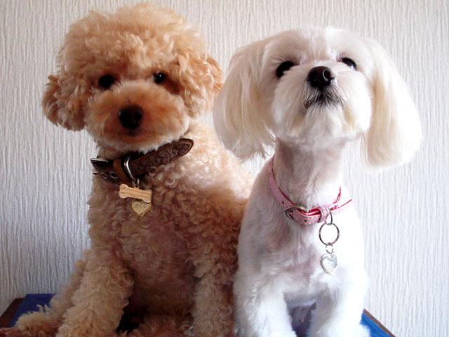 さくらちゃん(左)&ももちゃん(右)